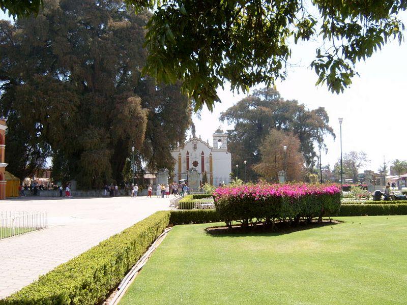 Mexico-Tule-Tree21.jpg