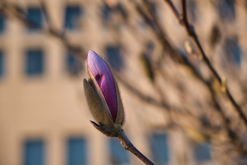 Signs of Spring 2