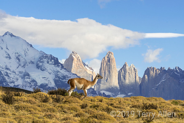 Guanacos, other wildlife