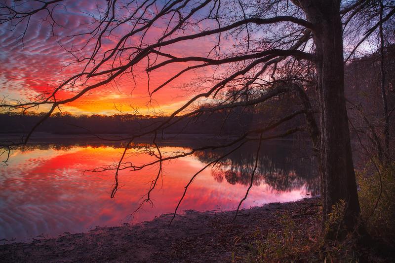 Flint Creek Tree Fiery Sunsetweb.jpg