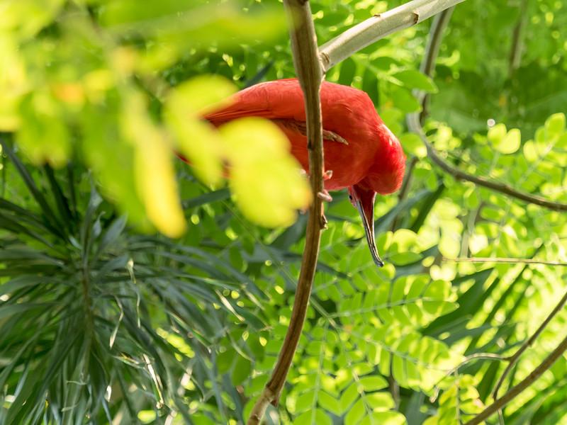 137 Apr 23 Asheboro Zoo  (1 of 1).jpg