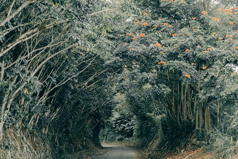 Hawaii20-391.jpg