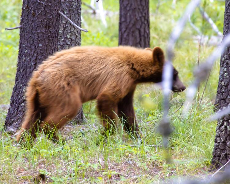 2010--07--01--_Montana_--_MG_4096--400.jpg