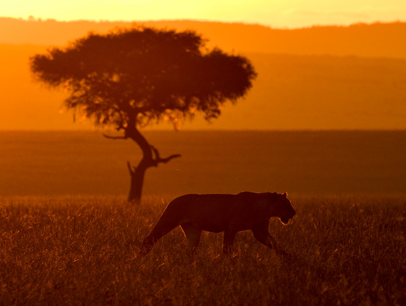 Dawn-Masai-Mara-1.jpg