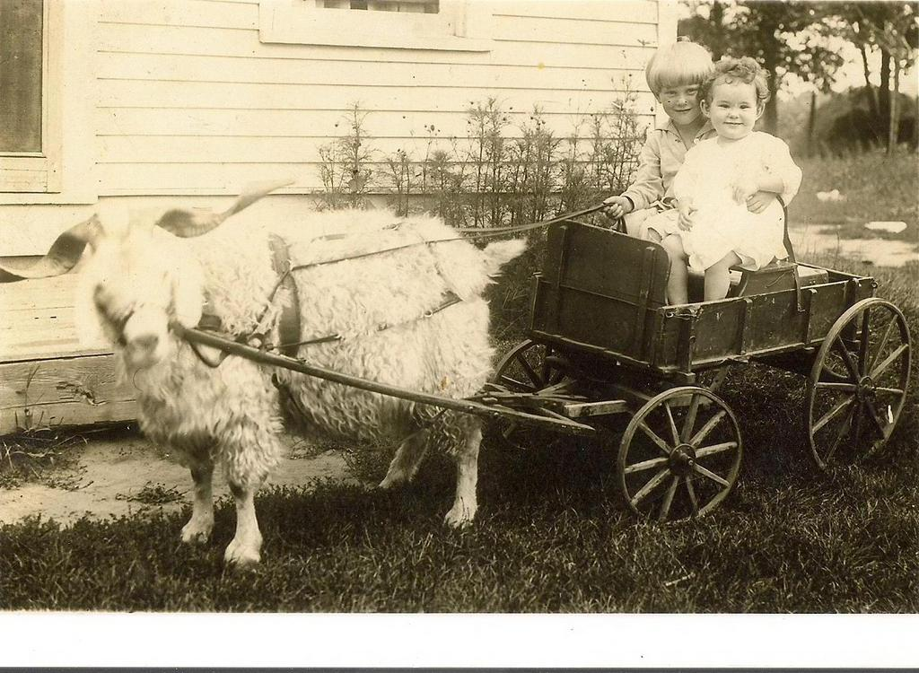 . The little treasures (Itinerant Photographer With Goat Cart Division)