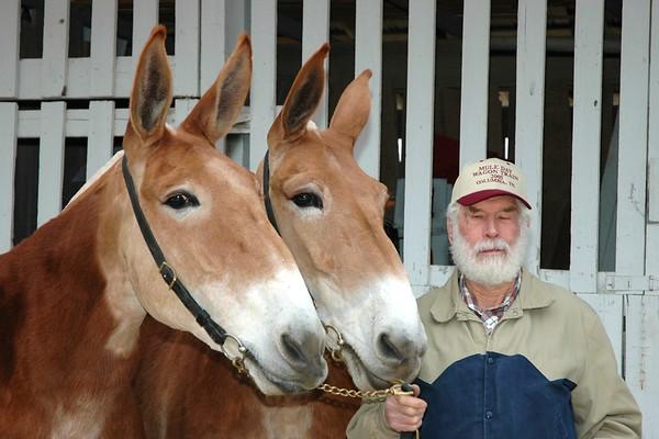 Mule Day 2005