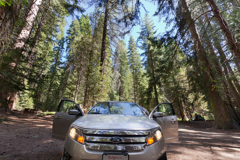 Sequoia_0134.jpg