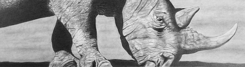 """Tamba"" (graphite on paper) by Elizabeth Dillman"