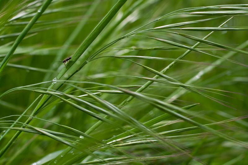 4578_Bug on Grasses.jpg