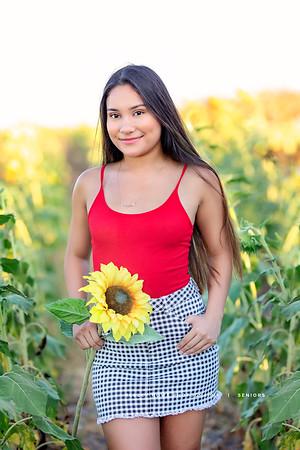 Savanna- Sunflower shoot
