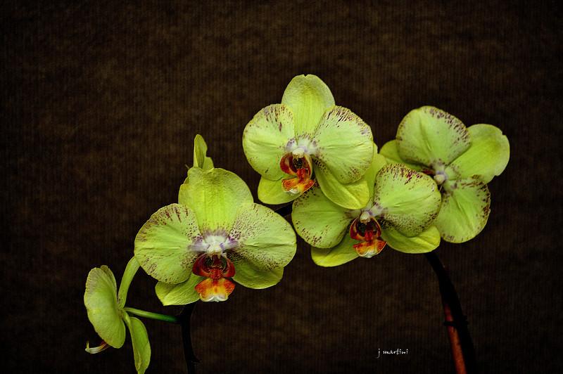floral display 8-11-2011.jpg