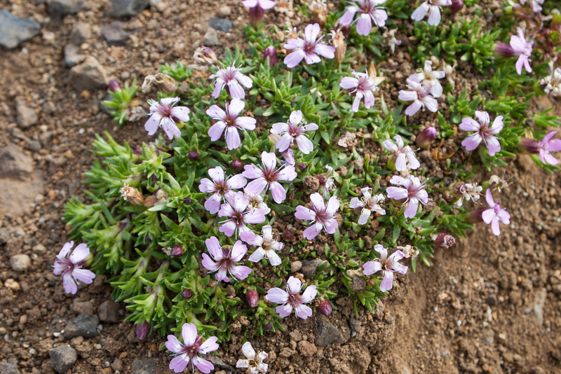 flowers near the crater