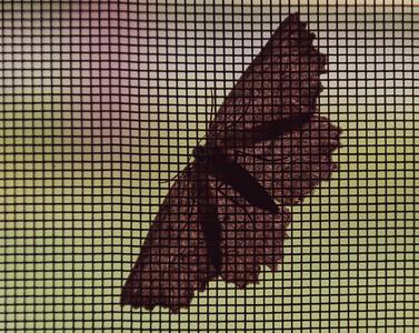 07-02-2018-moth