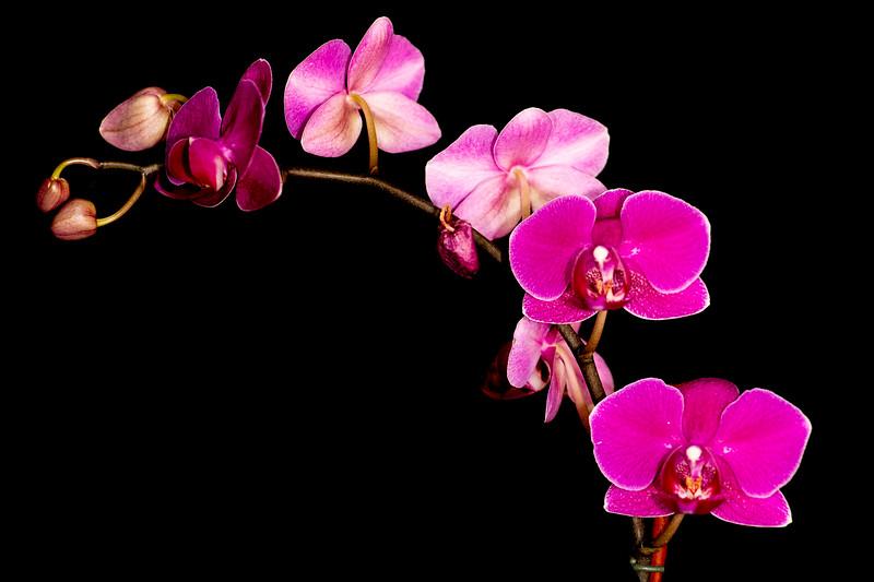 Orchids+Rekers-7.jpg
