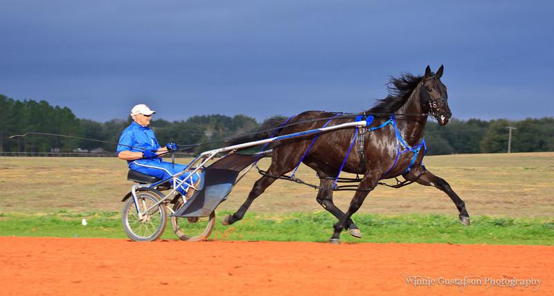 2011 STANDARDBRED HORSES IN TRAINING