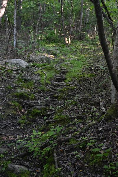 2019_06_26 CS Trail (57).JPG