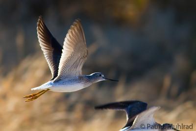 Santa Cruz River Shorebirds
