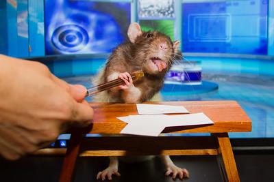 Rat Day 2016