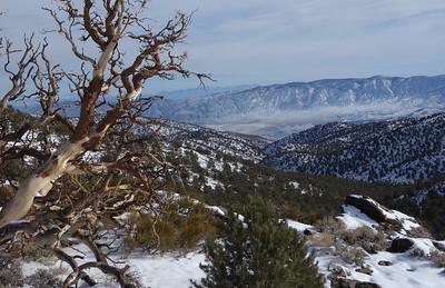 December 2012 White Mts of California