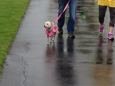 Walk & Wag photos - User submitted