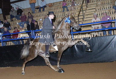 CLASS 26  OPEN WALKING HORSE SPECIALTY