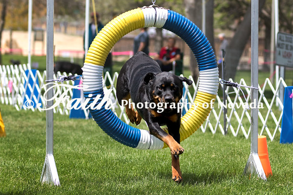 RUN 6 JWW EXC Groups - Agility May 14 2017