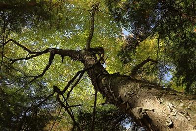 20211006 Tree Hike
