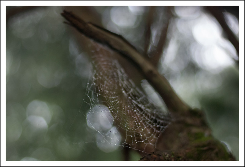 A spider web in the woods near our apartment.