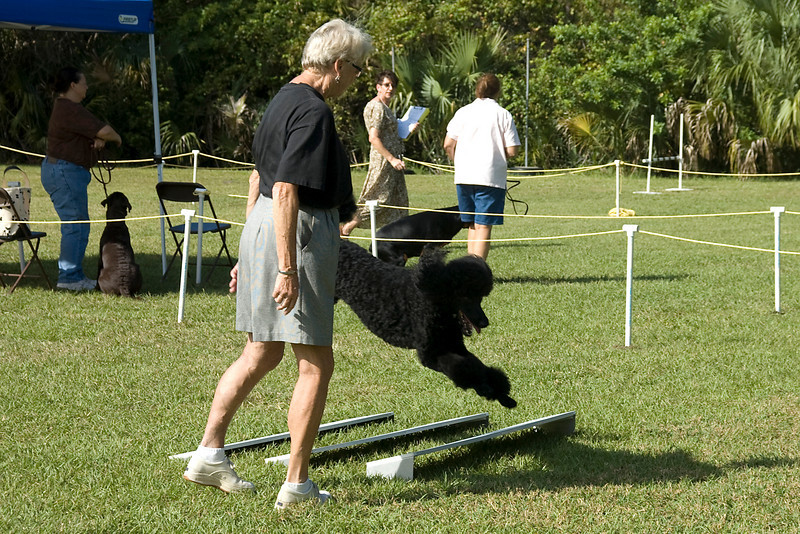 The Standard Poodle clears the broad jump in Open obedience.