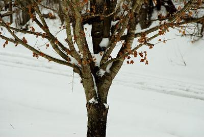 Jan 2011 Snow