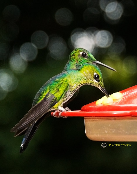2HBIRDS6-21.jpg