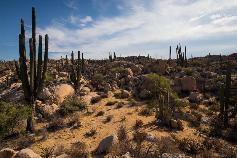 Baja Desert-3440.jpg