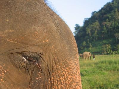 SE Asia - Elephant Nature Park, Chaing Mai, Thailand, November 2005