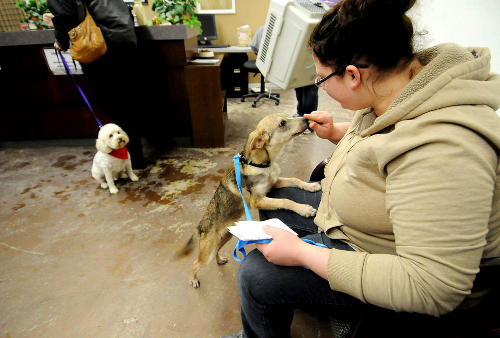 ". Sunny, left, waits to go home with his new foster mom, Joyce Stevenson of Maple Grove, as she checks out at MARS Saturday night.  Monika Kopet, right, of Crystal, gets to know ""Bandit\"", a five-month-old mixed breed dog she adopted. Kopet changed Bandit\'s name to Wilson.  (Pioneer Press: Sherri LaRose-Chiglo)"