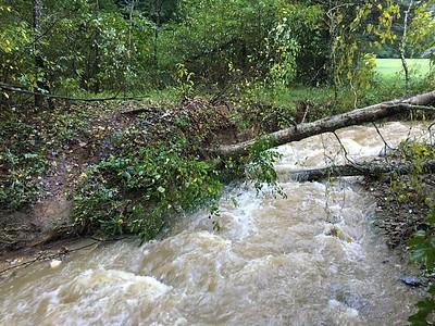 Florence on Goose creek