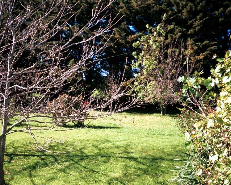Tree at home.jpg