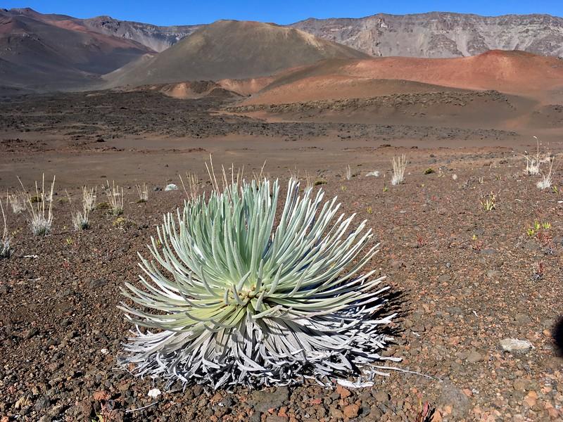 Flower bush in crater