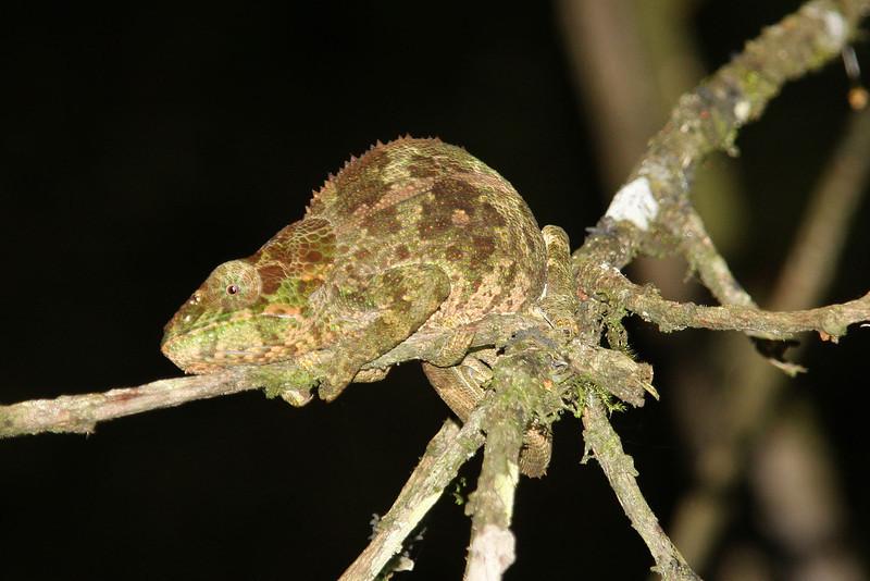 Madagascar, Fauna & Flora 9 Oda.jpg