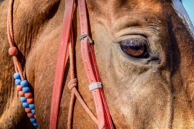Horse Riding in Santorini