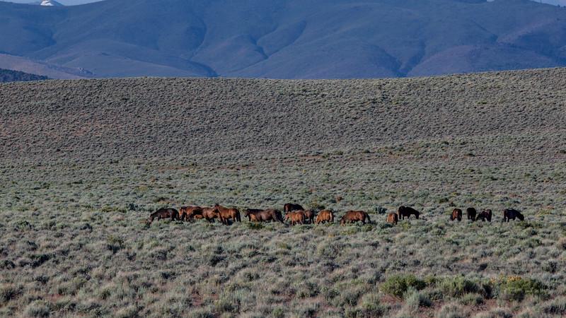 Wild Mustangs 2019-25.jpg