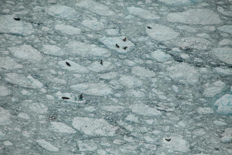 Alaska Icy Bay-3929.jpg