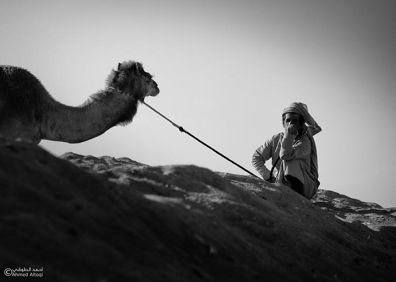 camels (22) copy- B&W.jpg