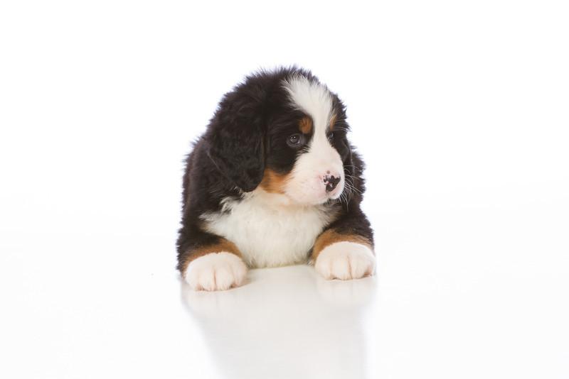 2013-Pearson Pups-Jun02-0285.jpg