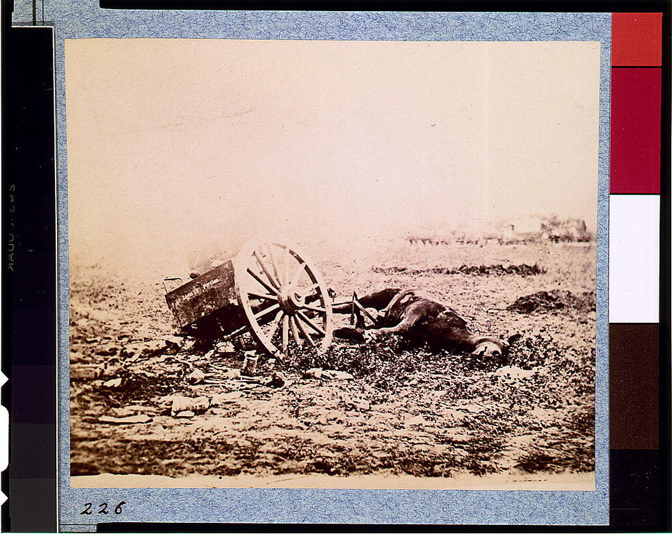 . Dead horse on battlefield, Gettysburg, Pennsylvania  - Library of Congress Prints and Photographs Division Washington, D.C.