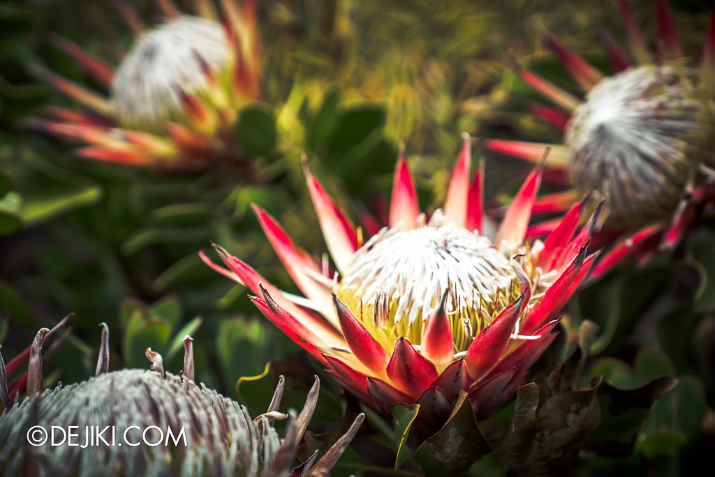 Gardens by the Bay - Tribal Tempo / Protea 2
