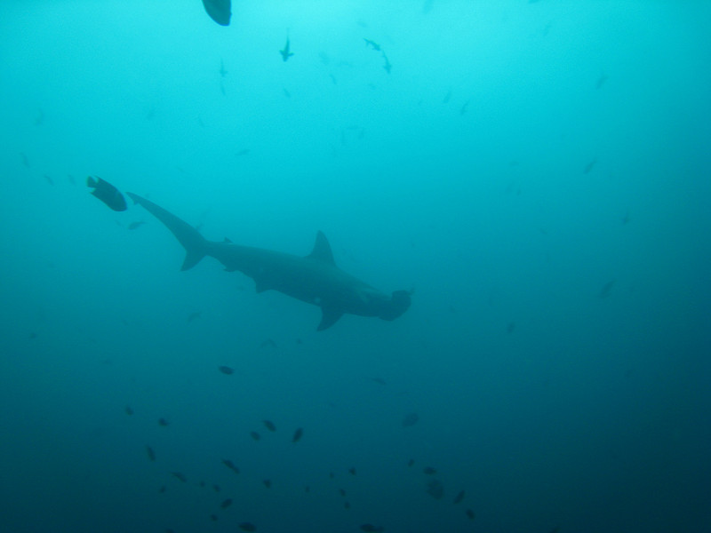Diving in the Galapagos (243 of 392)