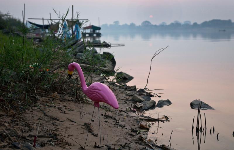 Mun_flamingo.jpg