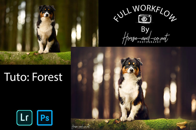 Tuto lightroom et photoshop