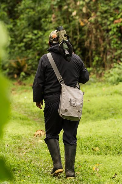 Rainforest40.jpg
