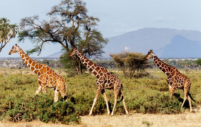 Kenya 2015-00126.jpg